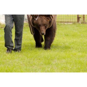 Curso de Cuidador Parques Zoologicos Online