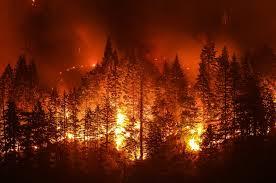 curso de prevencion de incendios forestales
