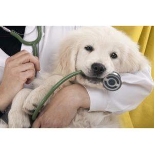 Postgrado-Dietetica-Nutricion-Veterinaria-Online