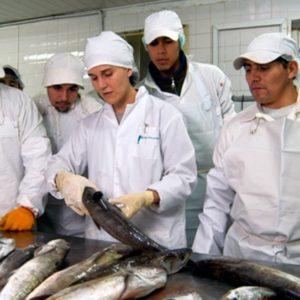 curso de manipulador de alimentos en pescaderias