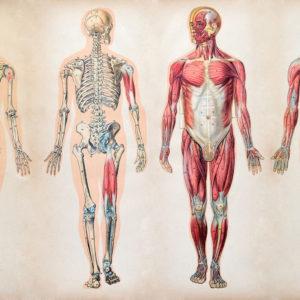 curso de anatomia